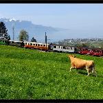 La vache et le train