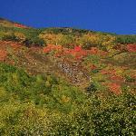 銀泉台からみる赤岳登山道の紅葉