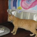 Один из четырёх местных котов (все рыжие) пришёл с инспекцией
