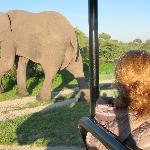 Wonderful elephant