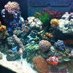 BIR aquarium