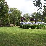 Agapanthus garden