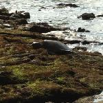 Honu! What beautiful creatures and so close to the condo!!!