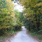 The road approaching Nurture Through Nature
