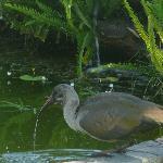 Thirsty bird!