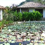 Bungalows and lily pond