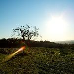 Photo of Agriturismo L'Uva e le Stelle