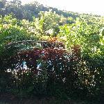 Giardino di Espoir
