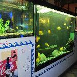 gli acquari con i pesci tropicali
