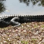 The gators in the sun.
