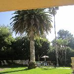 Palm tree on the yard