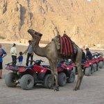 Foto di Sharm Happy Tours - Day Tours