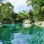 Lagoon style pool set amoungst the rainforest gardens