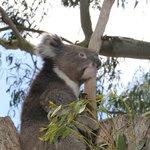 Parndana Wildlife Park