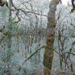 Moss forest!