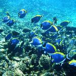 Unterwasserwelt an der Ile Cocos