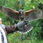Ireland's School of Falconry