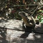 lizards on veranda - hard to shoo away