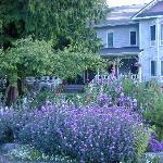 Springtime at Sea Cliff Gardens Bed & Breakfast