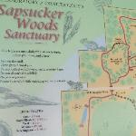 map of Sapsucker Woods