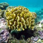 gorgeous coral in the waters of the lagoon