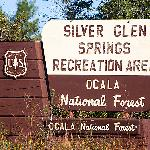 Silver Glen Springs - One of Ocala National Forest's hidden gems!