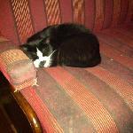 the hotel cat!