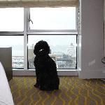 Shiloh enjoying the Hudson River view at Ink48