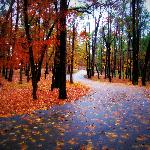 Enjoy fall colors in Texas all through December! Awesome!