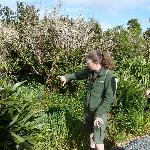 Anne guides us through the forest restoration