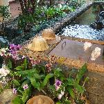 Pond with multicolored fish, turtle and Koi carp, at first plan orchids