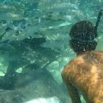Wilfred feeding fish
