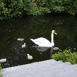 SWANS garden/canal