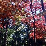 秋の野鳥の森公園(石神井公園)