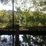 三宝寺池のベンチからの眺め