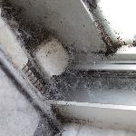 Spidesr webs in window and patio doors
