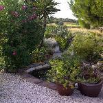 A garden view 2