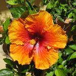 Another Hibiscus!!