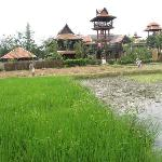 Rice paddy field - The restaurant in the distance