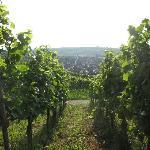 A view of Pfaffenweiller village from the vineyards