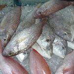 Fische in Auslage
