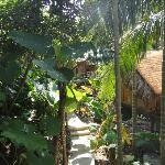 Trees provide cooling shelter