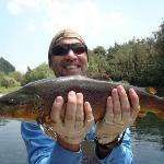 7lb Brown Trout