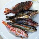 pesci di scoglio