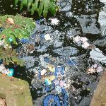 Sporcizia e rifiuti 1