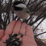 Foto de Inglewood Bird Sanctuary and Nature Centre