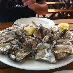 wild oysters-like nothing else