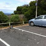 penguins in the carpark