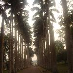 An avenue lined with palms, a grand entrance to the gardens