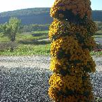 This tower of mums in the afternoon sun was particularly photogenic.
